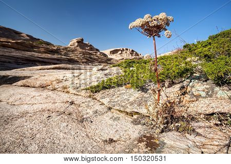 Desert Plant In Kazakhstan
