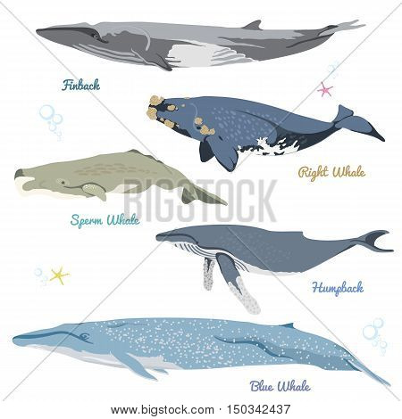 whales from the world realistic icons vector illustration include finback, right whale, sperm whale, humpback, blue whale