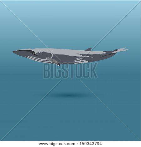 whale under water vector stock iilustration showing marine mammal