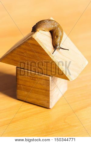 Wooden House And Slug