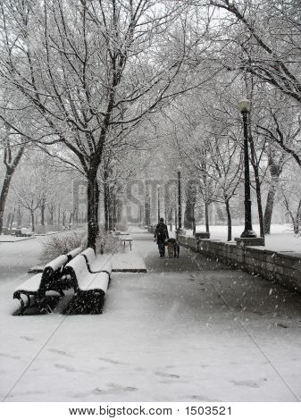 Snowstorm In Park In Montreal