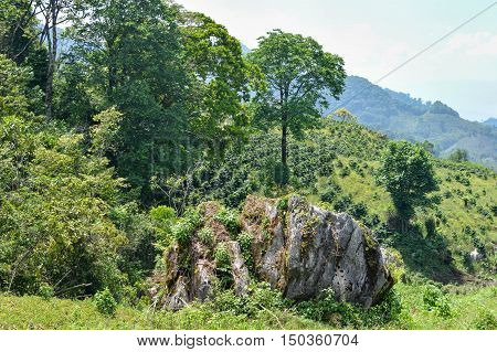 Beautiful landscape of coffee farms on the slopes of the hills surrounding a small village of coffee growers in San Luis de Planes by Santa Barbara National Park Honduras