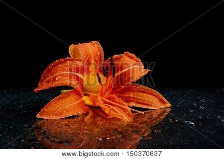 wet orange lily lying on black background