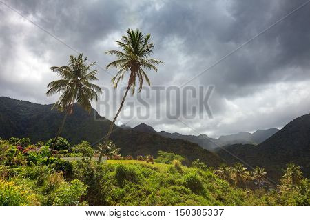 Storm clouds and palm trees over mountains of Caribbean island. Soufriere, St Lucia.
