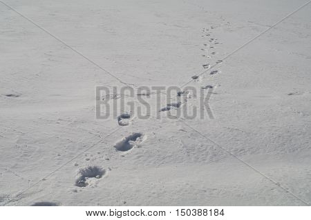 Human Footprints In The Snow Stretching Into The Distance.