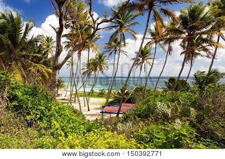 Exotic beach with palm trees in Caribbean. Anse Michel Beach Cap Chevalier Martinique Caribbean