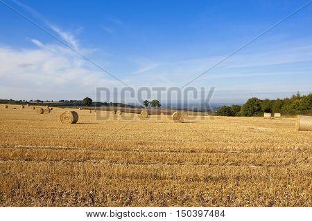 Hilltop Straw Bales