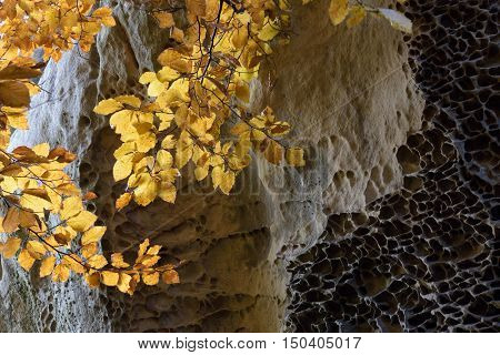 Beautiful texture of rocks. Yellow leaves on an beech branch. Autumn Beauty in nature