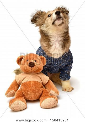Beautiful cute puppy dogs and teddy bear isolated on white background. Soft toy animal. Stylish. Flat lay top view