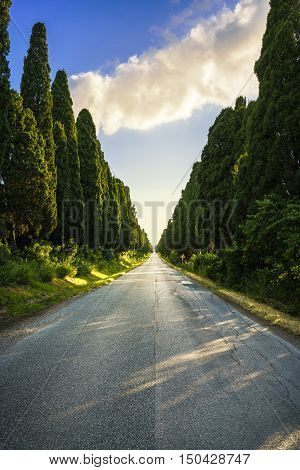 Bolgheri famous cypresses trees straight boulevard on backlight sunset landscape. Maremma landmark Tuscany Italy Europe. This boulevard is famous for Carducci poem.