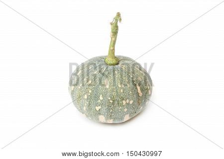 Green pumpkin isolated on the white background. Scientific name Cucurbita moschata Duchesne