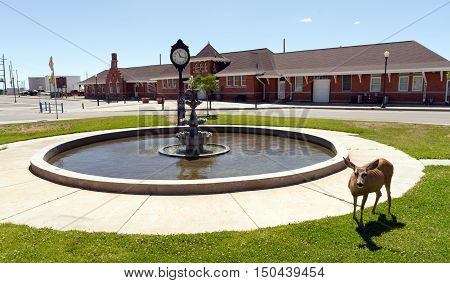 A deer grazes downtown Cheyenne Wyoming USA