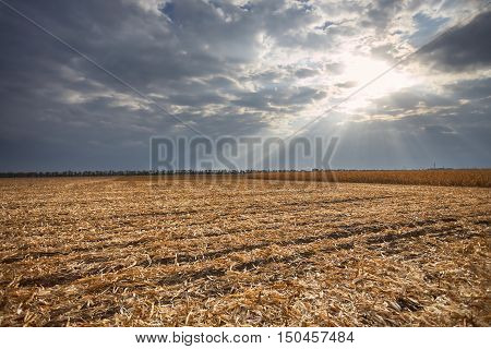 Cloudy landscape, farm fields under a cloudy sky, growing crops, sunset over the field, rural landscape, a field in autumn day
