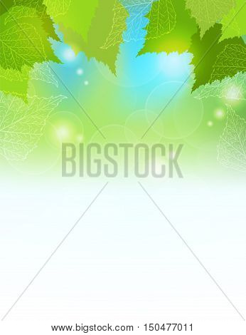 Vector Banner With green birch leaves on sunshine Spring or summer background