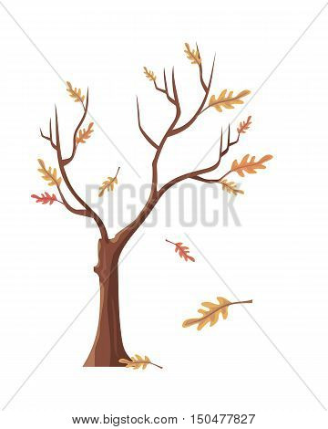 Isolated oak tree with falling leaves. Tree forest, leaf tree isolated, tree branch, plant eco branch tree, organic natural wood illustration. Falling autumn leaves. Oak icon. Vector illustration.
