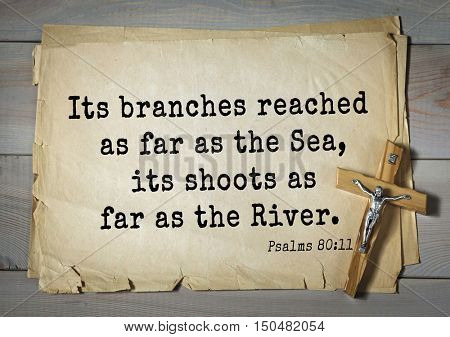 TOP-1000.  Bible verses from Psalms. Its branches reached as far as the Sea, its shoots as far as the River.