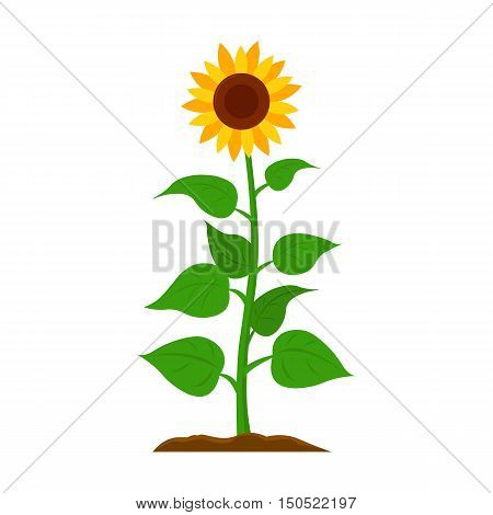 Sunflower icon cartoon. Single plant icon from the big farm, garden, agriculture collection.
