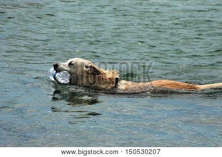 Cane che nuota con bottiglia in bocca