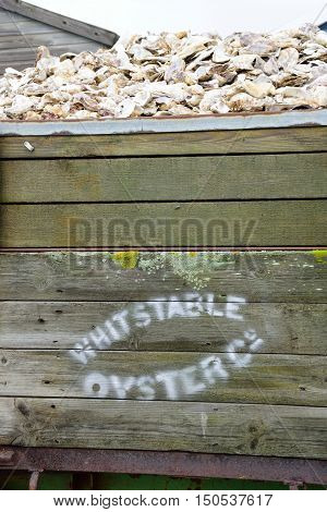 Whitstable United Kingdom - October 1 2016: Oyster shells in wooden container