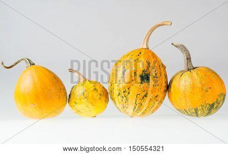 Row Of Four Various Organic Gourds Of Decorative Pumpkins