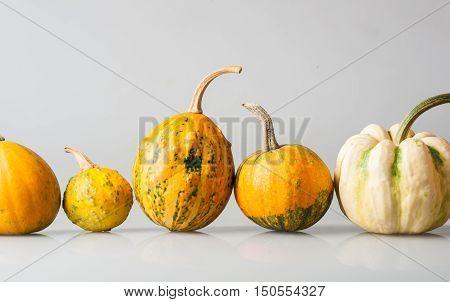 Row Of Five Various Organic Gourds Of Decorative Pumpkins