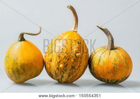 Row Of  Three Various Organic Gourds Of Decorative Pumpkins