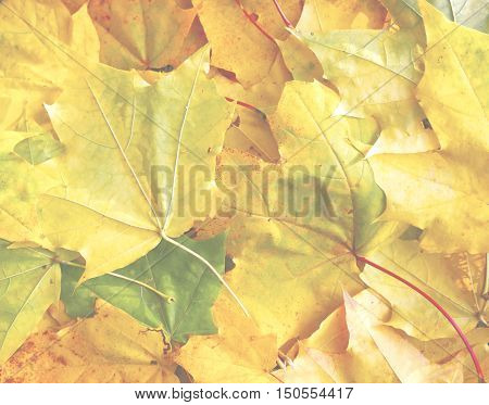 beautiful scenery and autumn elements with views of the nature of the photos micro-stock