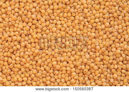 dry millet groats, yellow millet macro photo