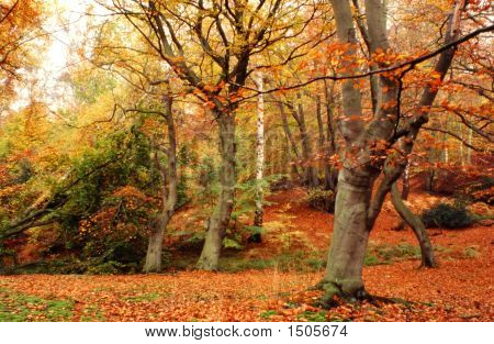 epping forest in England during