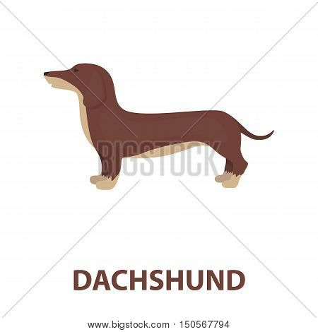 Dachshund rastr illustration icon in cartoon design