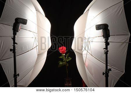 Red, Flower, Black background, well-lit, Rose, close-up, Studio setup