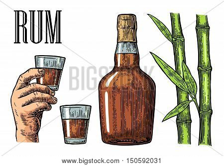 Glass and bottle of rum with sugar cane. Vintage color vector engraving illustration for label poster web invitation to party. Isolated on white background