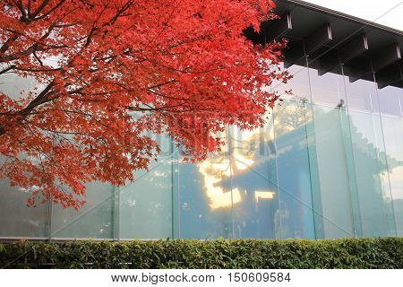 an inverted of window of Byodo-in Temple and garden in Kyoto Japan
