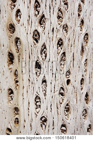 Dry cactus wood bark detail. background texture