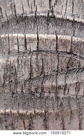 Coconut tree wood bark detail. background texture