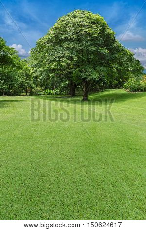 trees and green lawn  in park as background