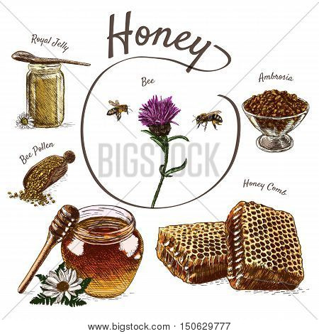 Royal jelly bee pollen honey comb ambrosia and honey colorful illustration. Vector colorful illustration of honey