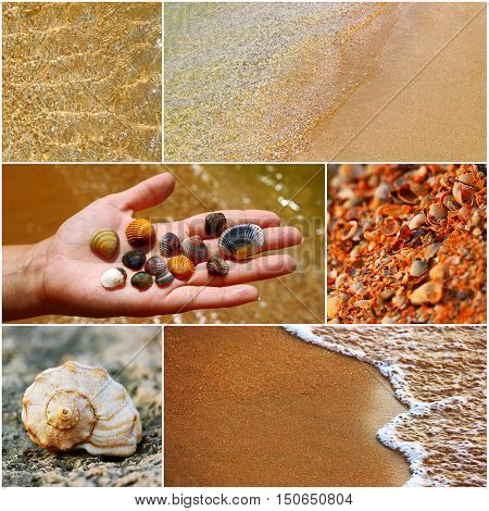 Woman hand holding beautiful sea shells, seashell on coast, waves on sand collage of toned images