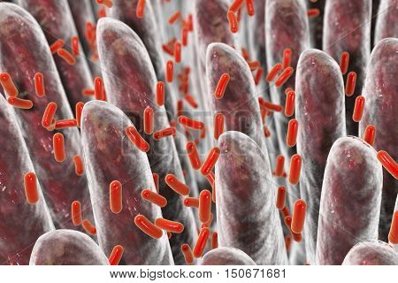 Human intestine with intestinal bacteria, 3D illustration