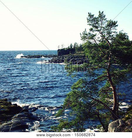 Lake And Pine Trees. Russian North. Valaam Island.