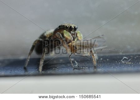 flora, animals, insects, spiders, spider, arachnid, arthropod, predator, predatory insects