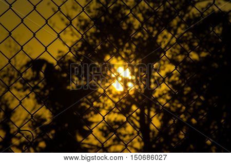 Sunset silhouette of a dandelion behind chain link fence