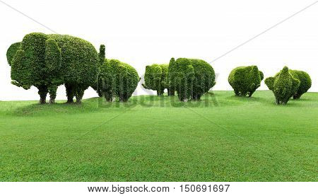 elephant  trees with green grass isolated on white background