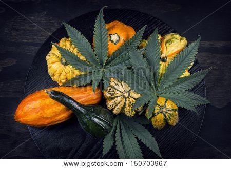 Harvest or Thanksgiving background with autumnal squash, gourds and cannabis leaf on black wood background