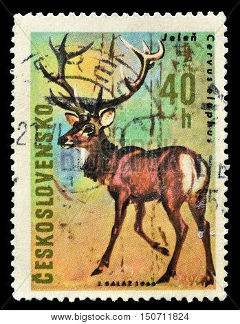 CZECHOSLOVAKIA - CIRCA 1966 : Cancelled postage stamp printed by Czechoslovakia, that shows Deer.
