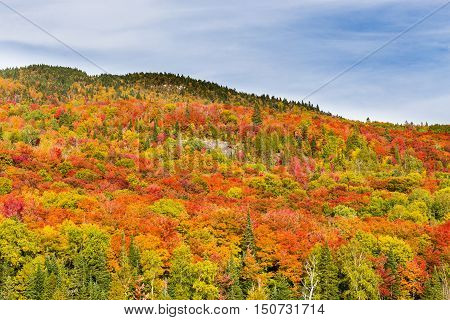 Autumn beginning to take affect on cottage country in the Quebec north. Trees turning blood red before the winter onslaught.