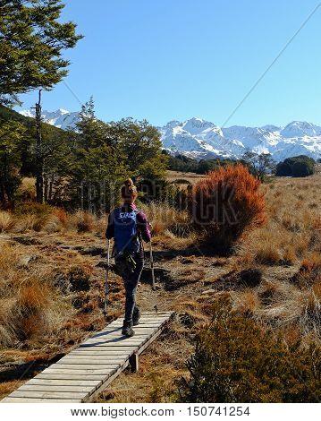A Woman Hiker Walks Among The Southern Alps.  Bealey Spur, Arthurs Pass, New Zealand
