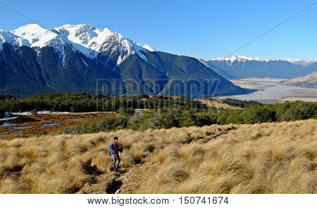 A Woman Hiker Walks in The Southern Alps.  Bealey Spur, Arthurs Pass, New Zealand