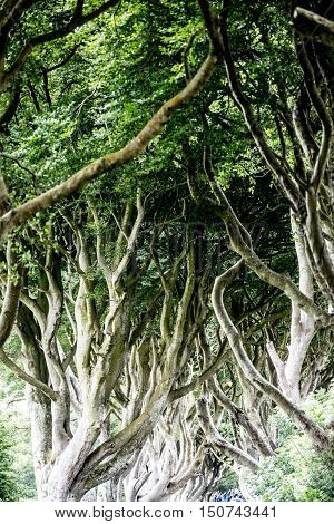 Magical Forest, Northern Ireland