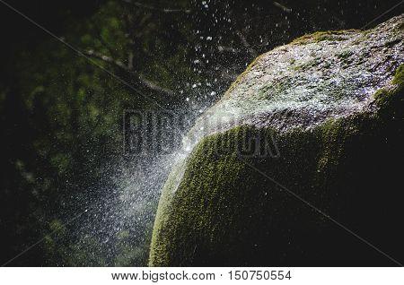 water drops fall moss nature dark background